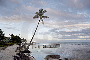 Palm Tree And Fish Pen Stock Images - Image: 8600224