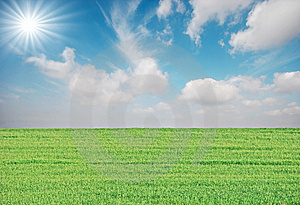 Grass And Sun Royalty Free Stock Images - Image: 8600639