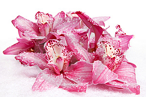 Orchid On Snow Stock Photo - Image: 8601090