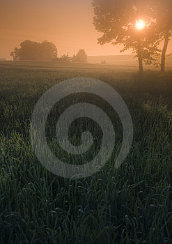 Foggy Sunrise Stock Photos - Image: 8601343