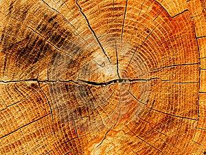 Cut A Tree An Oak Stock Photography - Image: 8601662
