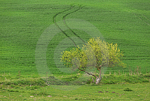 Lonely Tree Royalty Free Stock Photography - Image: 8601937
