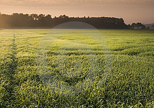 Foggy Sunrise Royalty Free Stock Image - Image: 8602256
