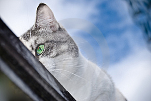Cat's Eye Royalty Free Stock Photos - Image: 8602278