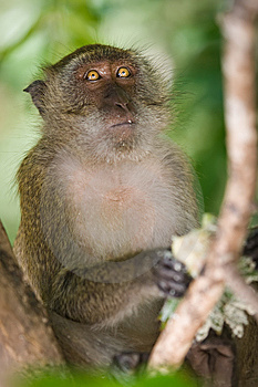 Monkey Royalty Free Stock Photo - Image: 8602455