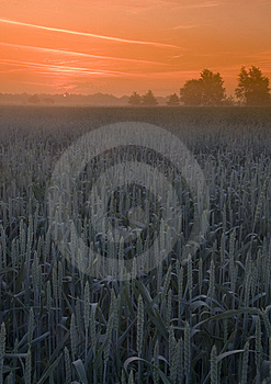 Foggy Sunrise Stock Photo - Image: 8602650