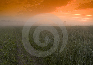 Foggy Sunrise Stock Photo - Image: 8602660
