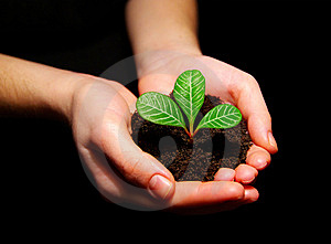 Plant In Hands Stock Photography - Image: 8602732
