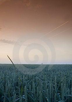 Foggy Sunrise Stock Photo - Image: 8602820