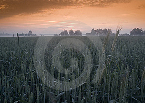Foggy Sunrise Stock Photo - Image: 8602870