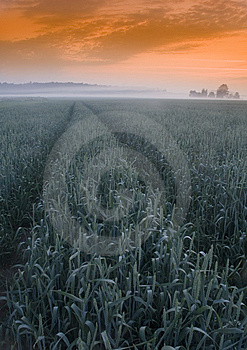 Foggy Sunrise Royalty Free Stock Photo - Image: 8602925
