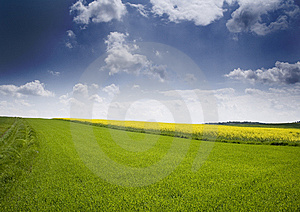 Oilseed Rape Royalty Free Stock Photos - Image: 8603158