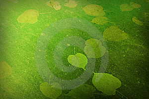 Green Background Royalty Free Stock Photo - Image: 8604025