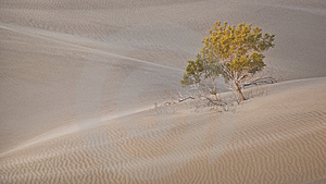 Tree And Sand Dunes Stock Photo - Image: 8604390