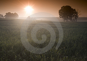 Nebeliger Sonnenaufgang Stockfoto - Bild: 8604480