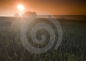 Foggy Sunrise Royalty Free Stock Images - Image: 8604619
