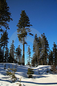 Trees In Winter Stock Image - Image: 8606411