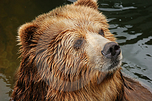 Bear Royalty Free Stock Photo - Image: 8606525