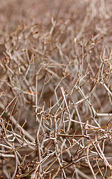 Texture Of Bush Stock Images - Image: 8606844