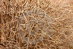 Texture Of Bush Royalty Free Stock Photos - Image: 8606858