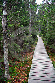 Footpath Through The Peatery Royalty Free Stock Image - Image: 8607016