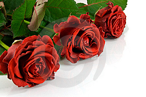 Red Rose Bouquet Royalty Free Stock Image - Image: 8607386