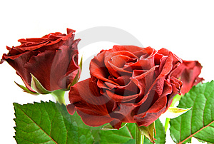 Red Rose Bouquet Stock Photo - Image: 8607440
