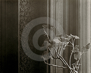 Geranium By A Window Royalty Free Stock Photos - Image: 8608488