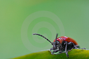 Curious Beetle Stock Images - Image: 8609354