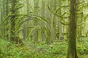 Moss Covered RainForest Stock Photo - Image: 8610180