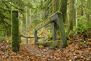 Rainforest Pathway Royalty Free Stock Photo - Image: 8610205