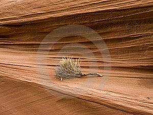 Tumbleweed Against Navajo Sandstone Layers Royalty Free Stock Photo - Image: 8610275