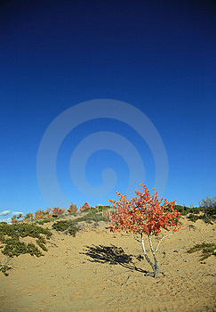 Sky And Trees Royalty Free Stock Image - Image: 8611766