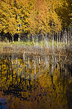 Autumn Forest Stock Image - Image: 8611841