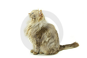 Cat Stock Photos - Image: 8612453