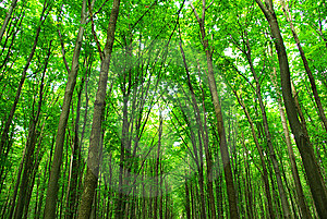 Forest Stock Image - Image: 8612511