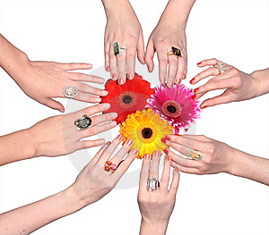 Three Flowers With Female Hands Royalty Free Stock Photos - Image: 8612888