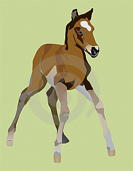 Clumsy Little A Foal Royalty Free Stock Photo - Image: 8612965