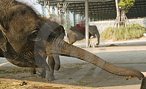 Elephant Stock Photography - Image: 8613012