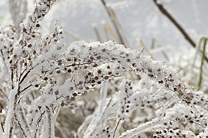 Snowy Grasses Stock Image - Image: 8613931