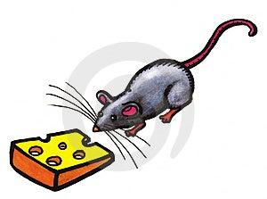 Grey Mouse Stock Photo - Image: 8614640