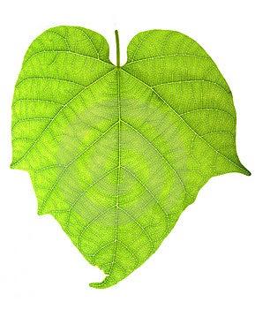 Leaf Stock Photography - Image: 8614982