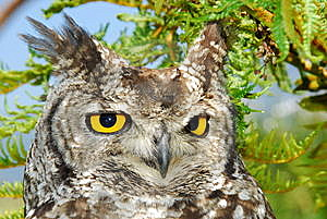 Owl Royalty Free Stock Photography - Image: 8615677