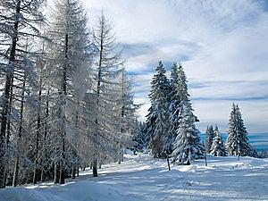 Winter Landscape Stock Photo - Image: 8617200