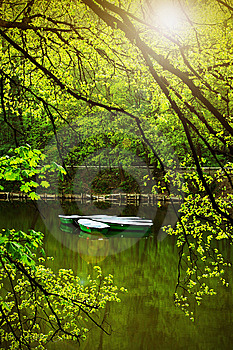 On The Summer Lake Royalty Free Stock Photography - Image: 8618337
