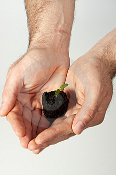 New Life (growth Concept) Royalty Free Stock Image - Image: 8618686