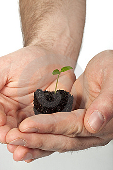 New Life (growth Concept) Stock Image - Image: 8618701