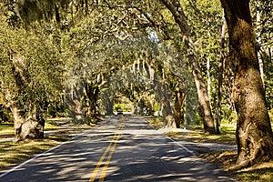 Car Entering Oak Tree  Lane Royalty Free Stock Photos - Image: 8619708