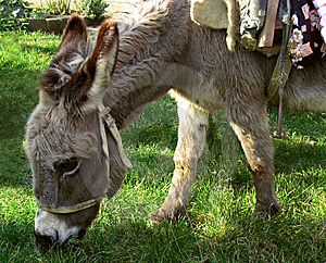 Donkey Royalty Free Stock Images - Image: 8620269