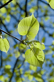 Green Leaves Stock Photography - Image: 8621582